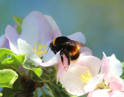 Segítségét kérik a méhek és a gazdák!