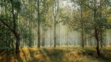 Alkotmánybírósági döntés: kevesebb tarvágás, természetesebb erdők!