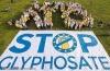 A rákkockázatú glifozát tilalmát követelik zöld szervezetek az agrárminisztertől