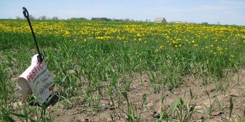 """Az Európai Bíróság megerősíti, hogy hatásvizsgálat szükséges az """"új GMO-k"""" esetén is"""