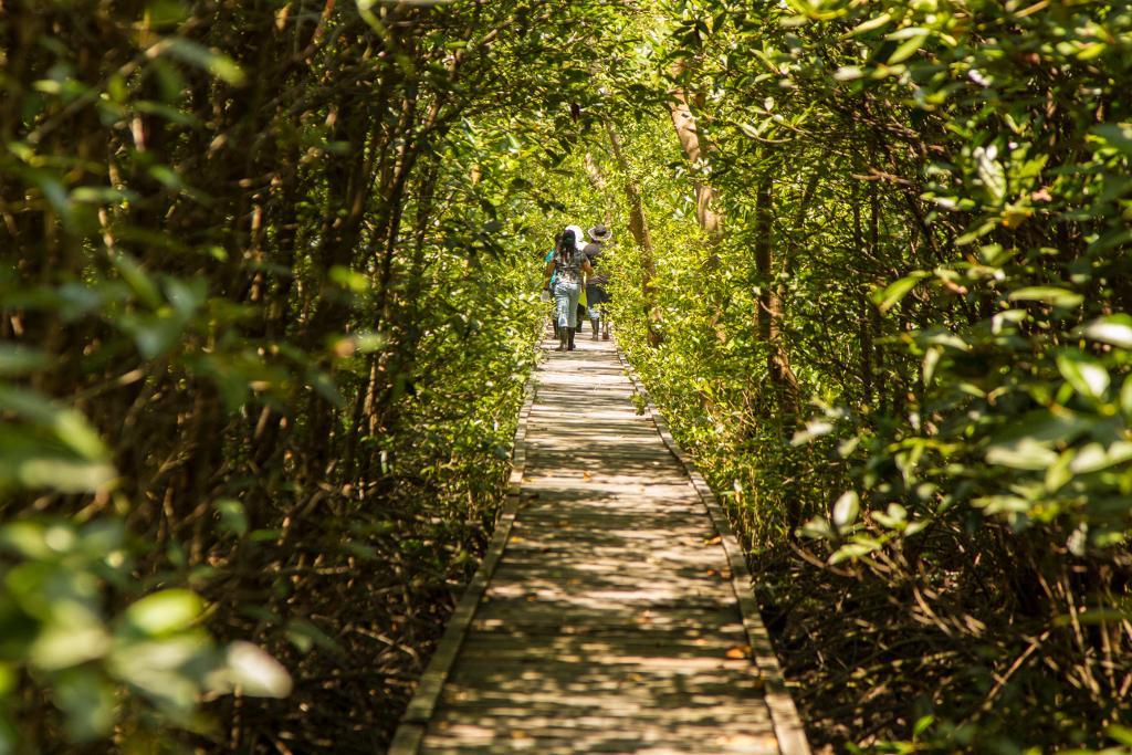 Madarak és Fák Napja: rendszerszintű változás szükséges a globális ökológiai összeomlás elkerüléséhez
